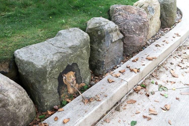 Arta Stradala Temporara Pe Strazile Ann Arbor