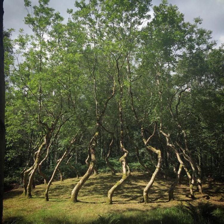Ash Dome -  Arta Din Natura (1)
